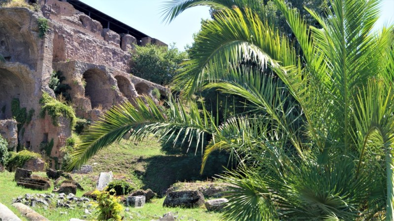 grüne Palmen am Palatin