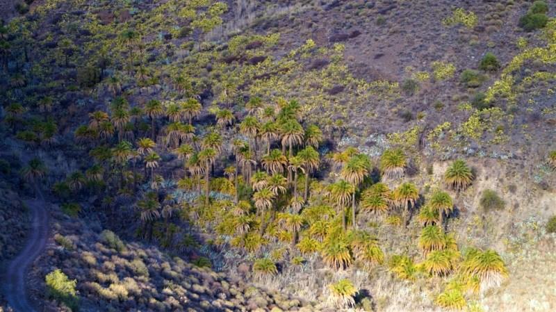 Die Ureinwohner der Kanarischen Inseln lebten in Grüne Palmen im Nirgendwo