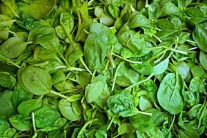 Frischer Spinat: Saison startet im März