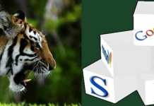 Picture of a Tiger facing Internet Components