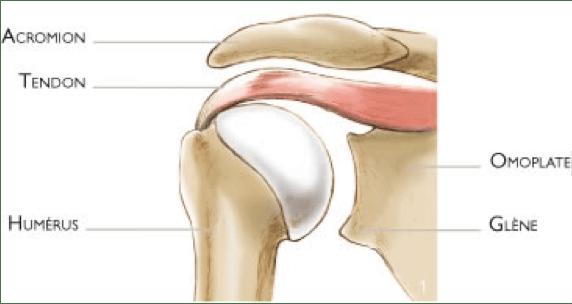 tendons épaule crossfit