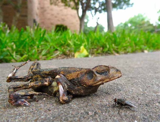 Beachten Sie Geschwindigkeitsbeschränkungen zum Schutz von Amphibien.