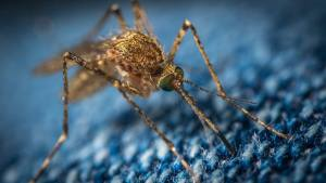 A mosquito rests on a piece of fabric