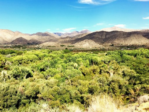 big-morongo-canyon-7