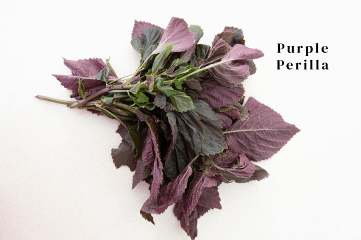 Purple perilla labelled
