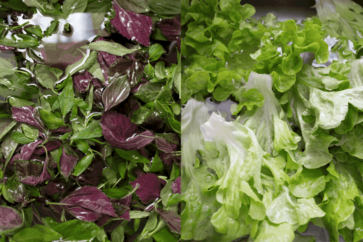 Herbs and lettuce in water.