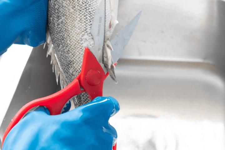 Scissors cutting into fish fins.