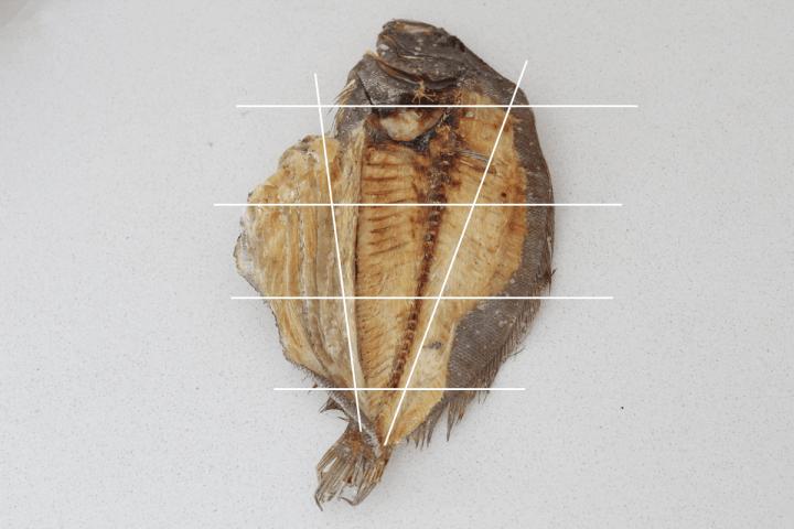 Flounder dissection diagram.