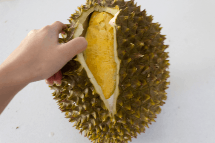 A hand opening up a durian.