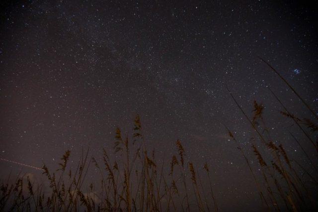 Night sky with wheat stalks.