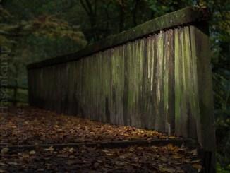 Brücke im Tiergarten wird saniert 2