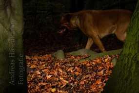 tiergarten-hunde