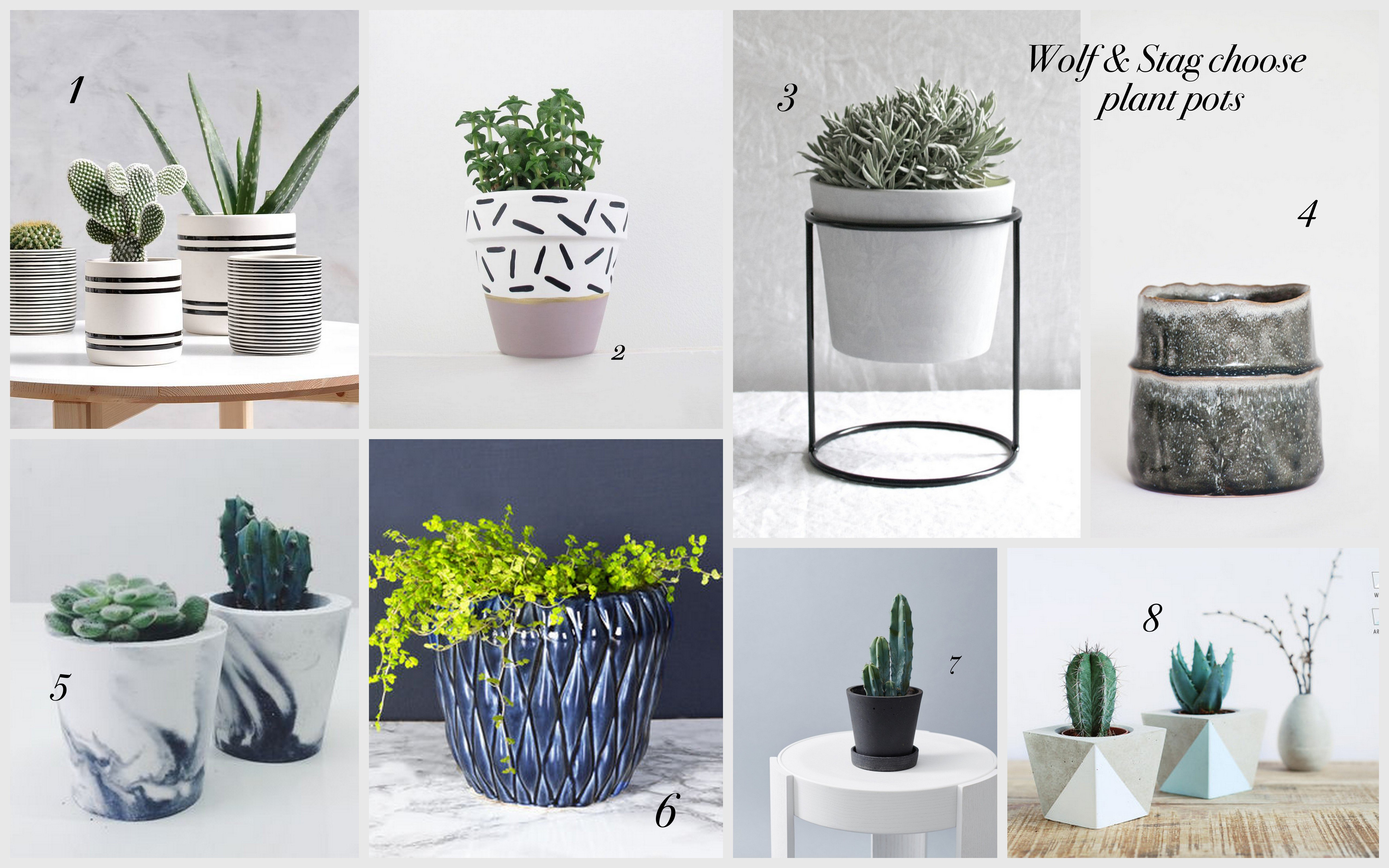 Wolf & Stag choose plant pots
