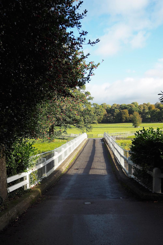Mount Juliet & Kilkenny   Wolf & Stag