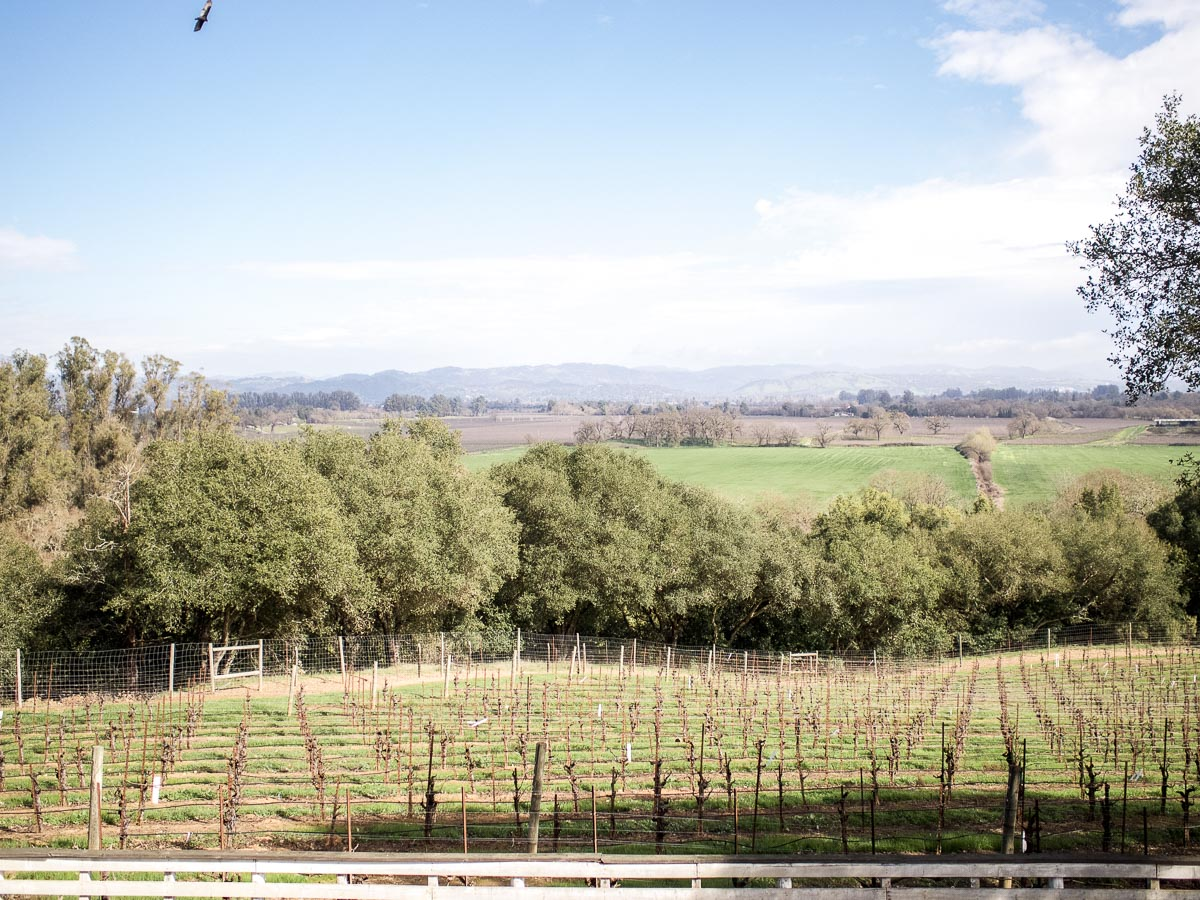 One Night in Wine Country | Woodenhead Winery | Wolf & Stag Adventures