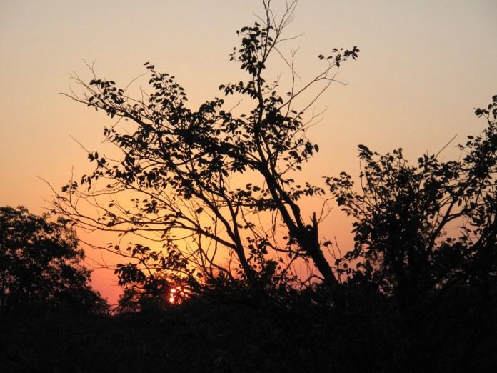 Evening light in Africa