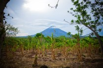 Banana trees with a cloud covered volcano