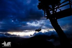 The Zebra swinging in the twilight