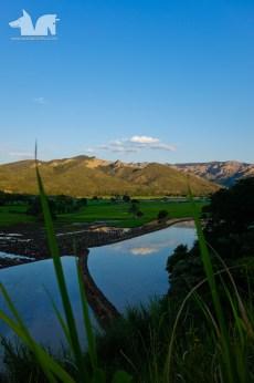 Peruvian ride paddies
