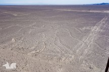 The world famous Nazca lines, hardly worth the detour.