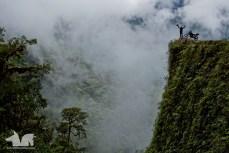 The famous Camino de las Yungas, or death road, in Bolivia