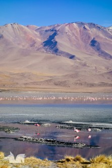 Laguna Hedionda with it's flock of flamingos