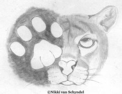 Nikki van Schyndel - Cougar & Track - Pencil Drawing