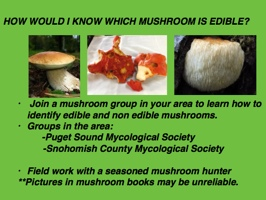 relationship between mushrooms and trees