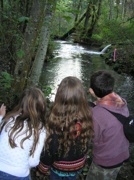 Clark's Creek Spawning Salmon