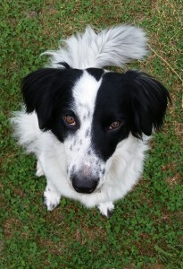 """Lily aka Camp Dog aka """"Silly Lily Dilly Bean"""" is our Lead Homesickness Avoidance Specialist""""."""