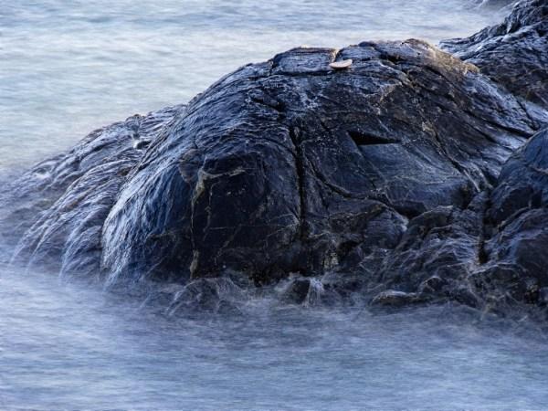 'Elephant Seal'