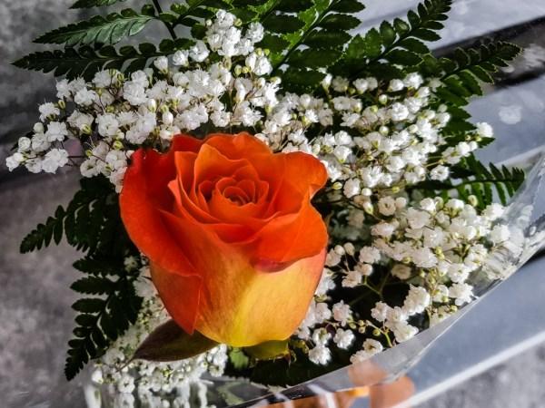 Mom's Birthday Rose