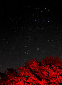 Perseus trailing from Cassiopeia down towards the tree