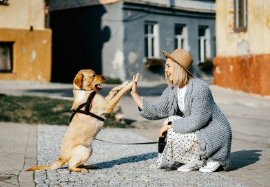 Ράτσα σκύλου και ζώδια – Ποια ταιριάζει στο καθένα