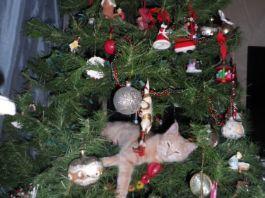 Кошки против ёлок