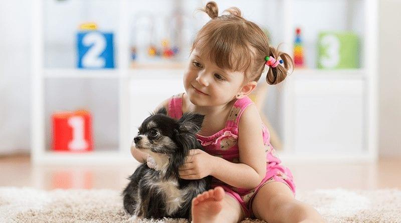 6 Manfaat Mengenalkan Hewan Peliharaan Kepada Anak