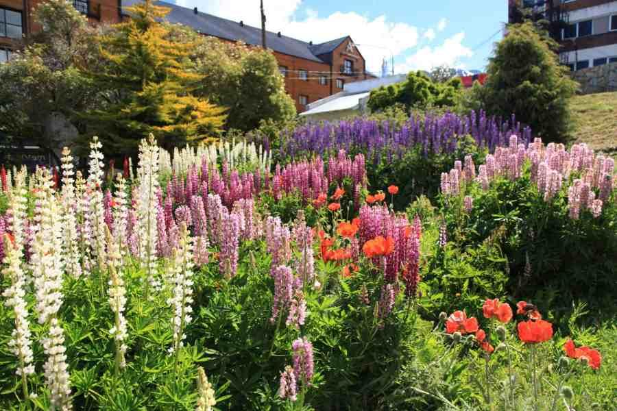 Flower_garden_in_Ushuaia_(5543010755)