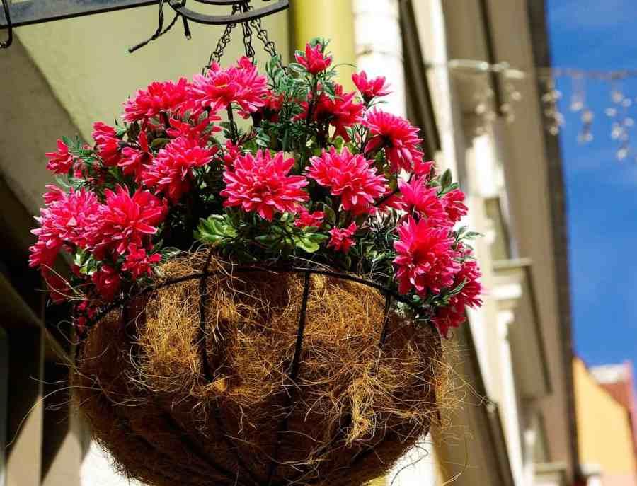 beautiful flower-pot-