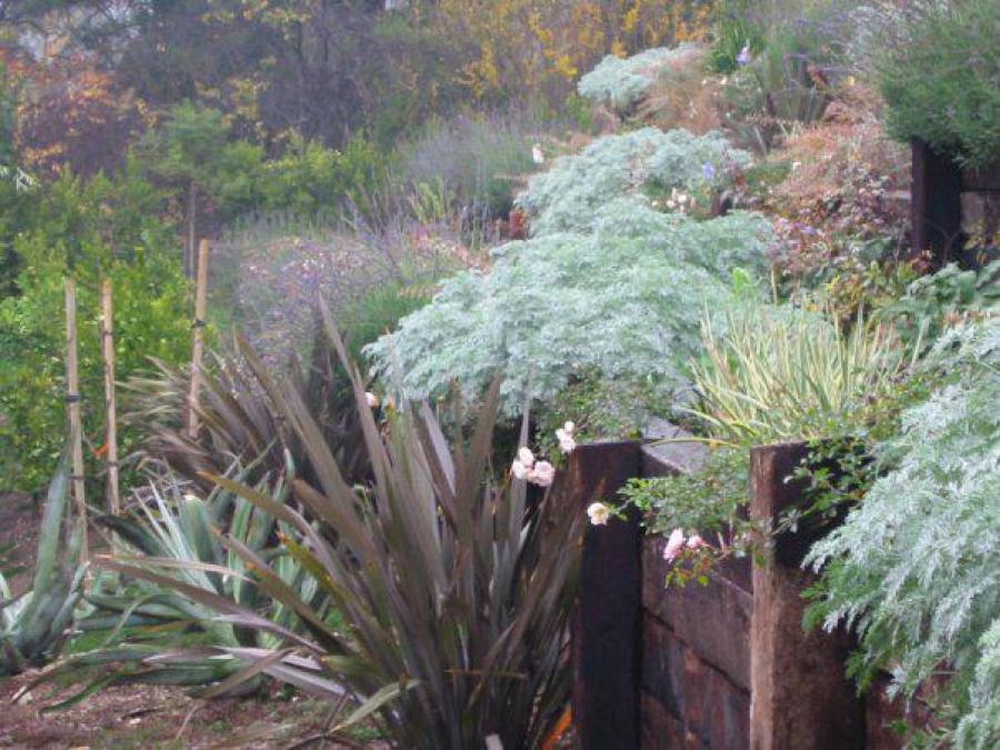 Landscape_design_by_Renee_Gunter_called_the_Macys_garden