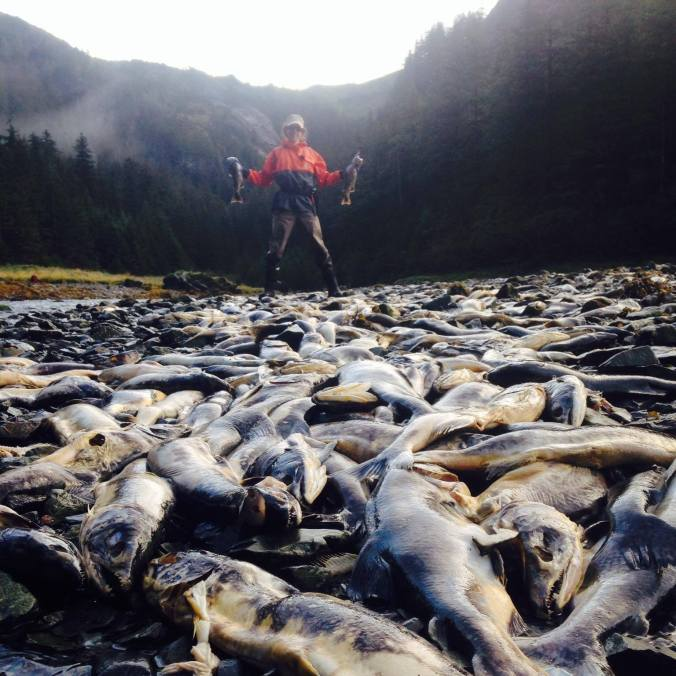 Samantha amidst a field of carcasses in Cordova, Alaska. Prince William Sound Science Center Wild-Hatchery Salmon Project. Photo by Kate Ruck