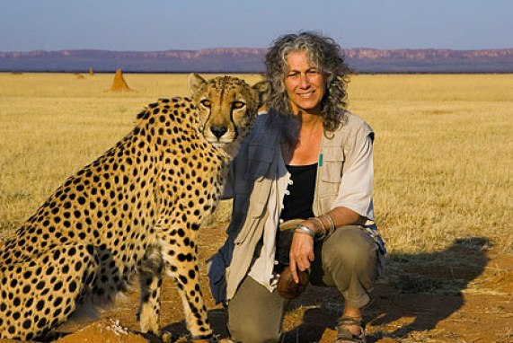 "Dr. Laurie Marker with cheetah ""Chewbacca"" (CCF's ambassador cheetah that was rescued from a trap on a livestock farm and raised by Dr. Marker) Cheetah Conservation Fund, Namibia"
