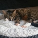 The Best Cat Beds Of 2020 To Keep Your Feline Friends Cozy