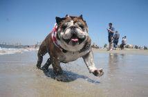 רחיצת כלבים בים