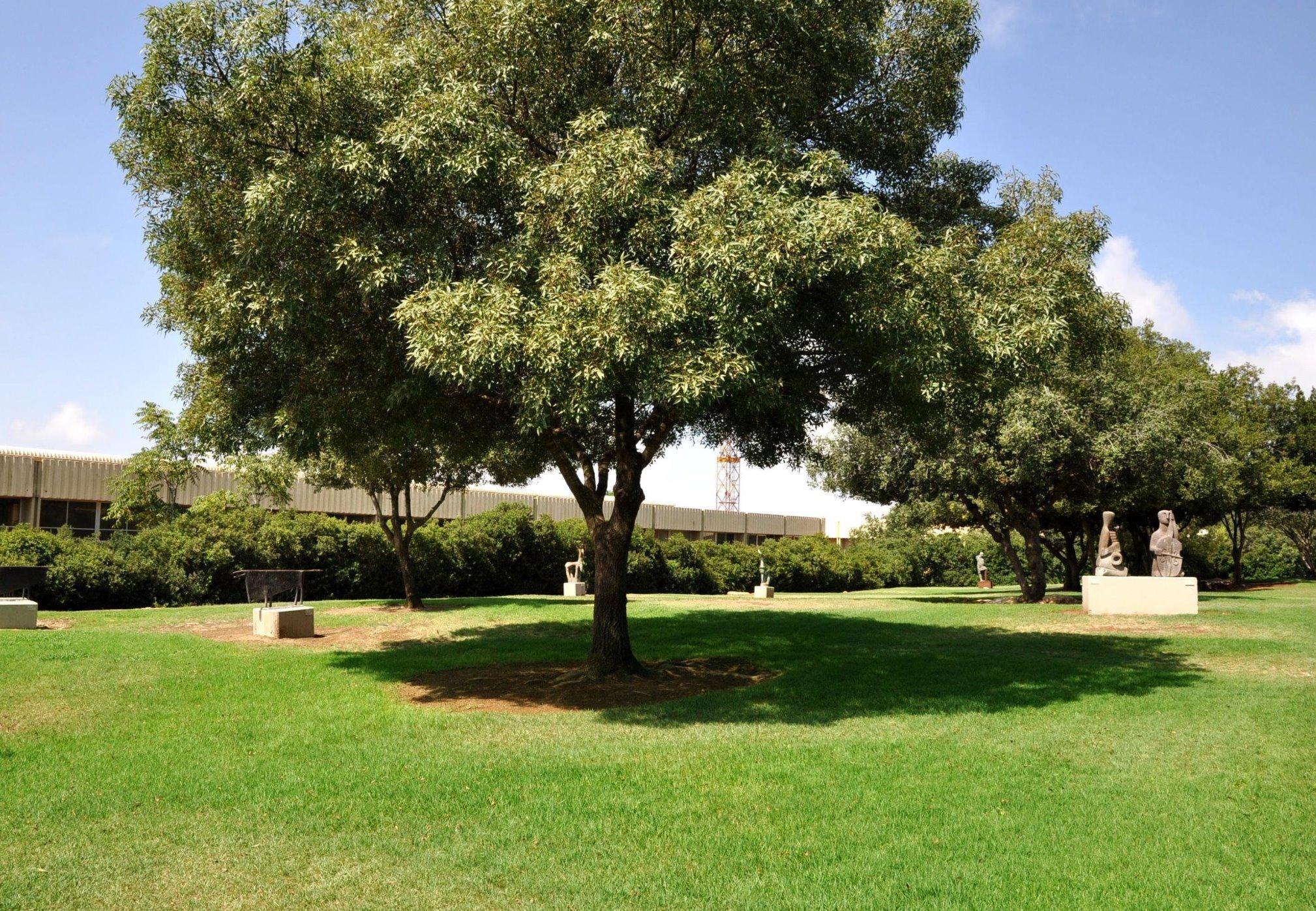 גן הפסלים- המוזיאון הפתוח תפן