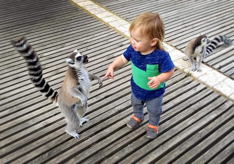 חנוכה בגן החיות התנכי