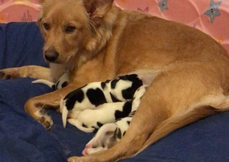 Mother And Cute Puppies Dog