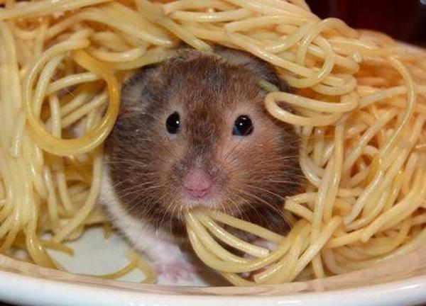 cute mouse eating spaghetti