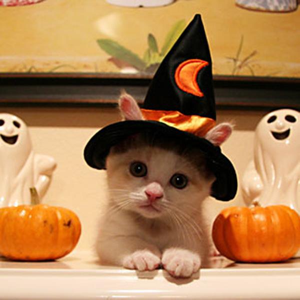 Little cute kitten in wizard hat