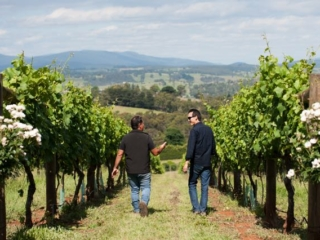 Winemaker & Viticulturist - a picture says 100 words!