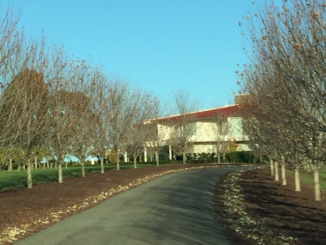 Beautiful tree lined driveway at Warramunda Estate